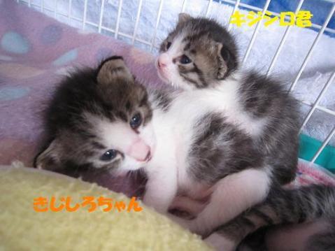 きじしろ兄妹2011‐5‐1
