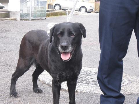 IMG_8024 迷子犬