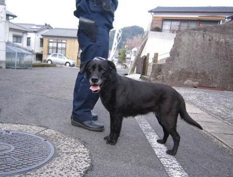 IMG_8016迷子犬