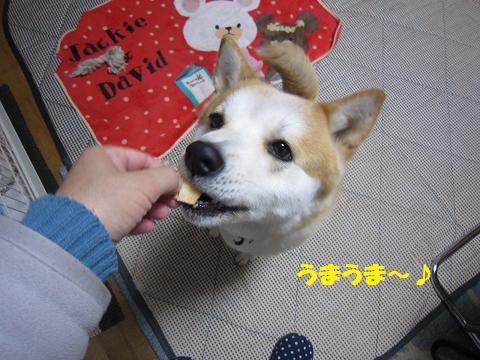 IMG_8067 うめちゃん