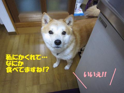 IMG_8029 うめちゃん
