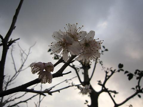 IMG_8300花