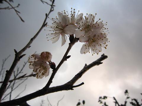 IMG_8307花