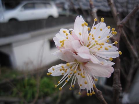 IMG_8302花