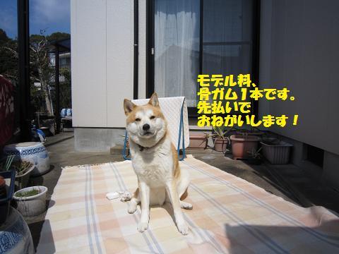 IMG_8353うめちゃん
