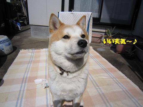 IMG_8349うめちゃん