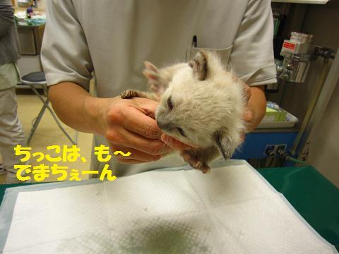 IMG_8661ソニカちゃん