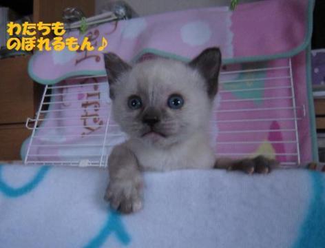 IMG_8847ソニカちゃん