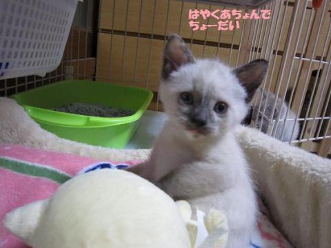 IMG_9031ソニカちゃん
