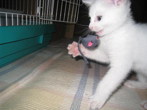 ぷ~ちゃんネズミと遊ぶ