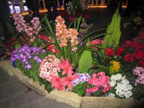 フラワーパークのお花
