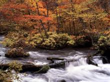 美脚への道♪ 温泉三昧♪ のんびり努力♪-秋