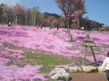 美脚への道♪ 温泉三昧♪ のんびり努力♪-芝桜
