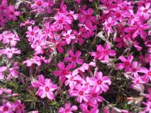 美脚への道♪ 温泉三昧♪ のんびり努力♪-濃いピンク