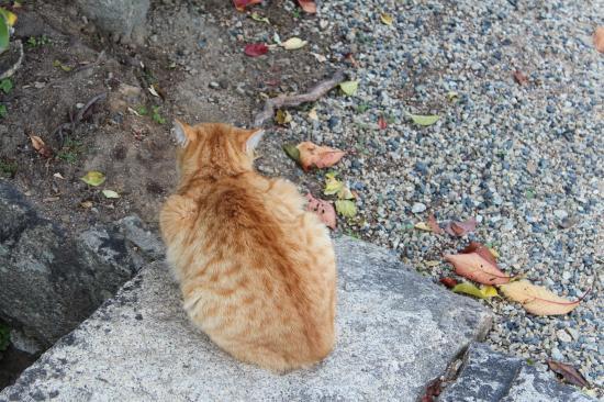 尾道 猫 1