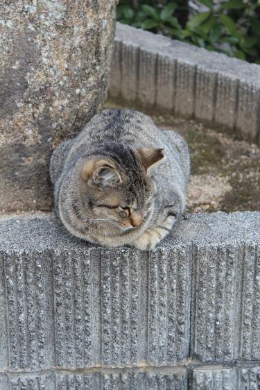 尾道 猫 2