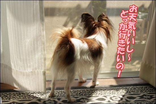 022_20111016124612.jpg