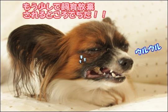 107_20111018151000.jpg