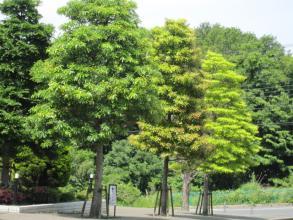 樹の緑もいろいろ