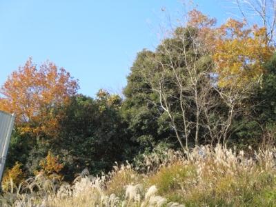 冬の木々に青空