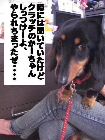 CIMG2507_convert_20110413165826.jpg