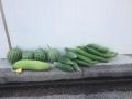 収穫物たち