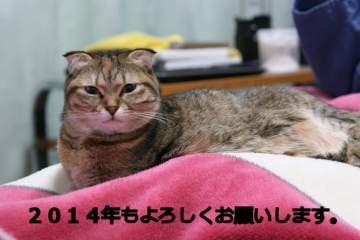 suzu561.jpg