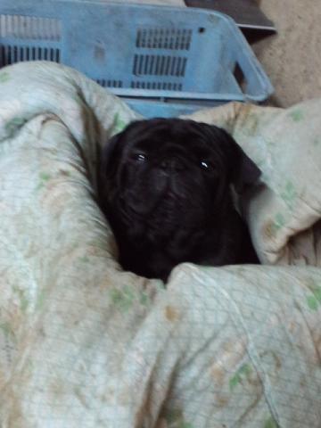 ポリコン犬
