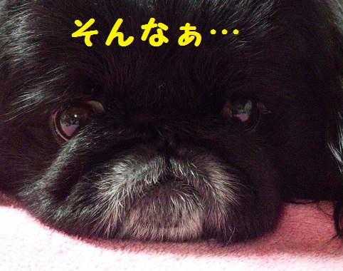 20140105dai5.jpg