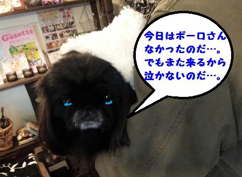 20140111mu9.jpg