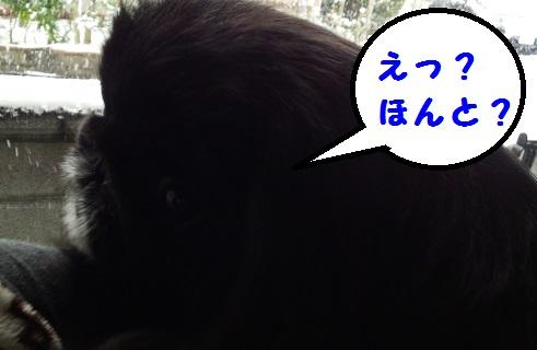 20140114mu2.jpg