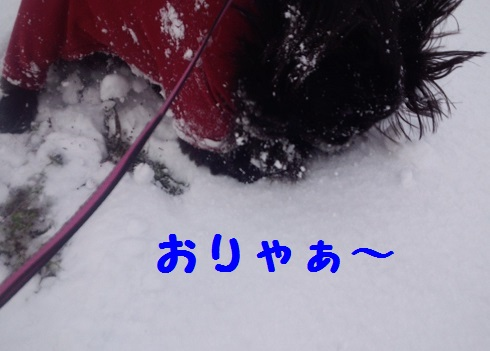 20140127mu4.jpg