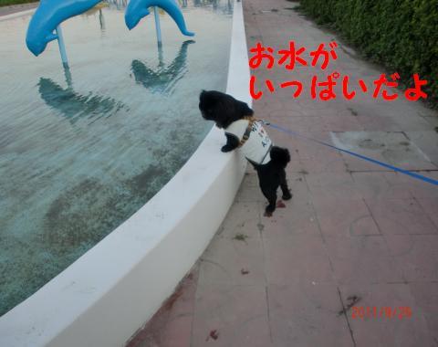 初めてみたプールに・・・・