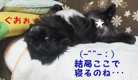 爆睡中~~~