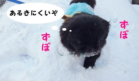雪のさんぽ①