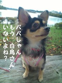 初★千波湖 お散歩デビュー