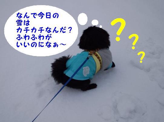 雪の上で ①