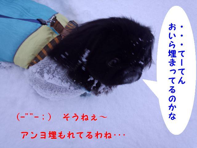 雪に埋もれて①