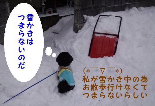 雪かき番犬 ①