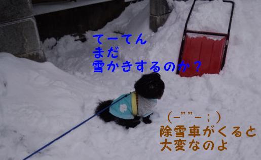 雪かき番犬 ②