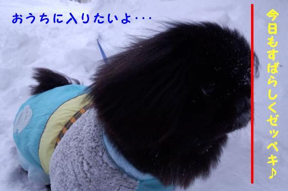 雪かき番犬 ④