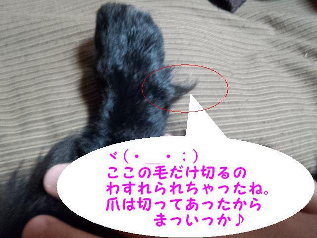IMG_20120327_193433.jpg