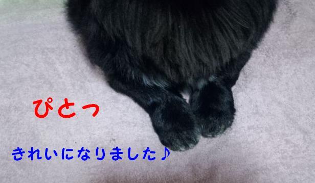 IMG_20120327_194330.jpg