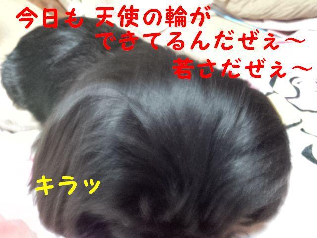 IMG_20120404_212442.jpg