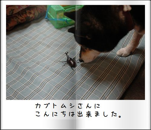 DSC_0919a.jpg