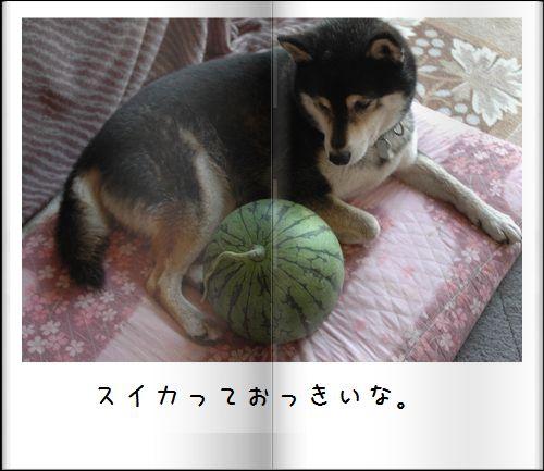 DSC_1048a.jpg