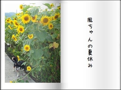 P8062870a.jpg