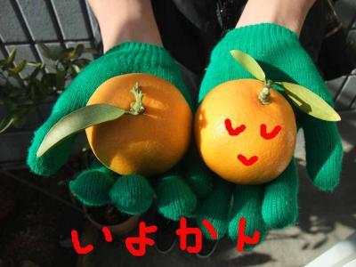 mini_21_iyokan_DSCF0488.jpg
