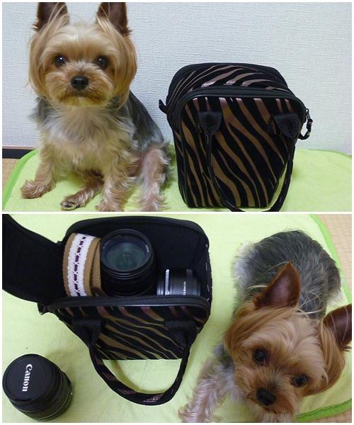 カメラバック2