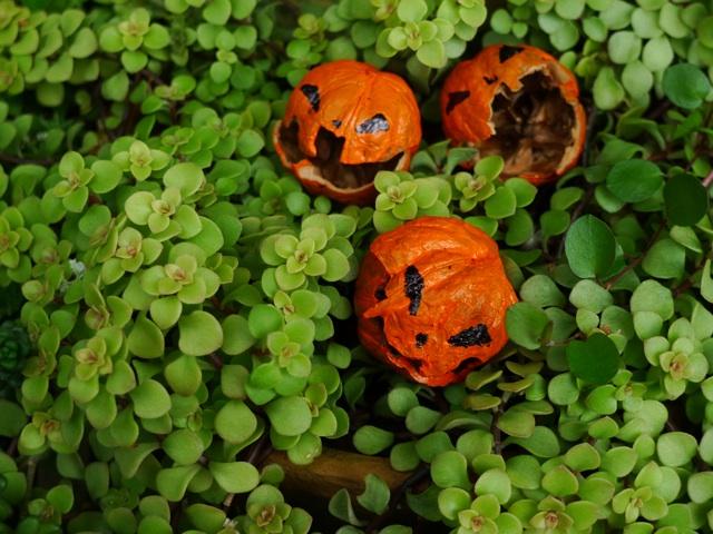 gardeningfun_pumpkins.jpg
